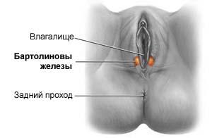 Фото вагин с входом возле ануса 1 фотография