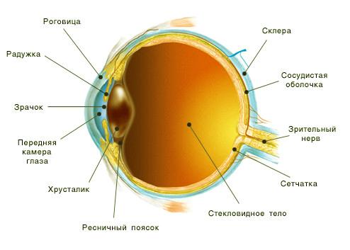 Какие линзы для глаз с астигматизмом